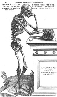 Vesalius Illustration